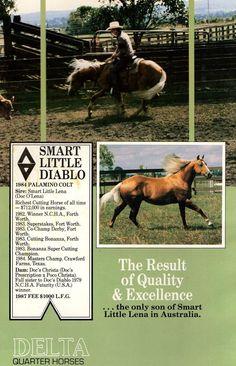 Smart Little Diablo