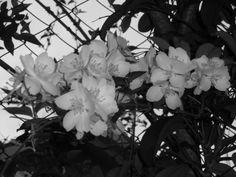 Flores em Pb.