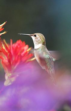 How To Make Your Garden a Hummingbird Haven!