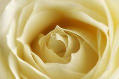 "500px / Photo ""White"" by Mark Johnson"