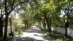 the walkway from Orange St to the Cape Town CBD. Look out for dozens of little squirrels playfully scampering around here ; Table Mountain, Main Attraction, Most Beautiful Cities, Squirrels, Walkway, Cape Town, South Africa, Country Roads, Gardens