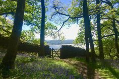 A glorious woodland walk in Cumbria with views of Lake Windermere