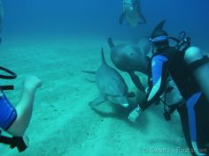 Scuba diving with dolphins at Anthony's Key Resort-what I will be doing when i go here in the winter!