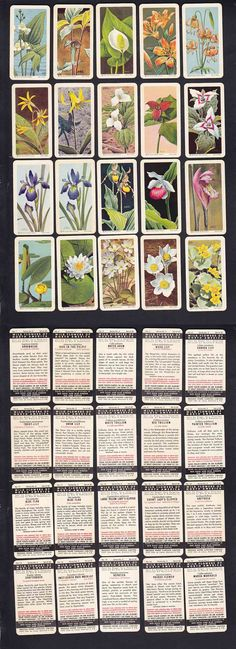1963 BROOKE BOND RED ROSE TEA CARD WILD FLOWERS OF NORTH AMERICA FULL SET 48/48 photo