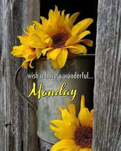 Good Morning Images, Good Morning Quotes, Happy Monday, Yellow Flowers, Thoughts, Inspire, Inspiration, Biblical Inspiration, Images Of Good Morning