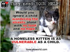 A homeless kitten is just as vulnerable as a child. DOn't turn your back on them. They NEED your help!