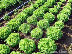 Springtame Vegetables - Download From Over 50 Million High Quality Stock Photos, Images, Vectors. Sign up for FREE today. Image: 4777206