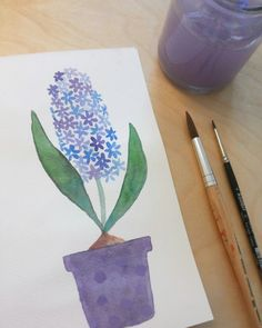 Hyacinth - Mme Ziba - Spring