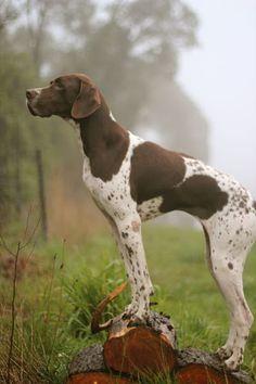Completamento seducido por este perro. G+, Maria Regina Pitte Monteiro.