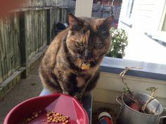 Macey Cat | Pawshake Lower hutt