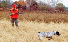 Using Dogs to Hunt Wolves: Does Anyone See The Irony?