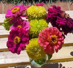 Cinco De Mayo Flowers | Bright summer flowers!