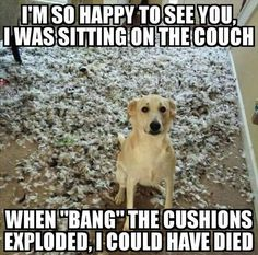 Funny animal quotes - Of The Happiest Dog Memes That Will Keep You Laughing For Hours dogmemes Funny Animal Jokes, Stupid Funny Memes, Cute Funny Animals, Funny Relatable Memes, Cute Baby Animals, Funny Dogs, Cute Dog Memes, Pet Memes, Hilarious Sayings