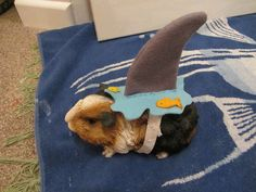 Hilarious guinea pig is ready for Halloween.