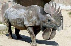 Nature's mistake?: Photoshopped funny animals www.ICanDoThings.com