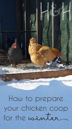 How to prepare a chicken coop for winter // Chickens, ducks, and turkeys can thrive during a cold winter season with no problems, if you take the right precautions to keep them healthy and somewhat comfortable. // @grownandhealthy