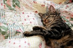cat on quilt, perfect
