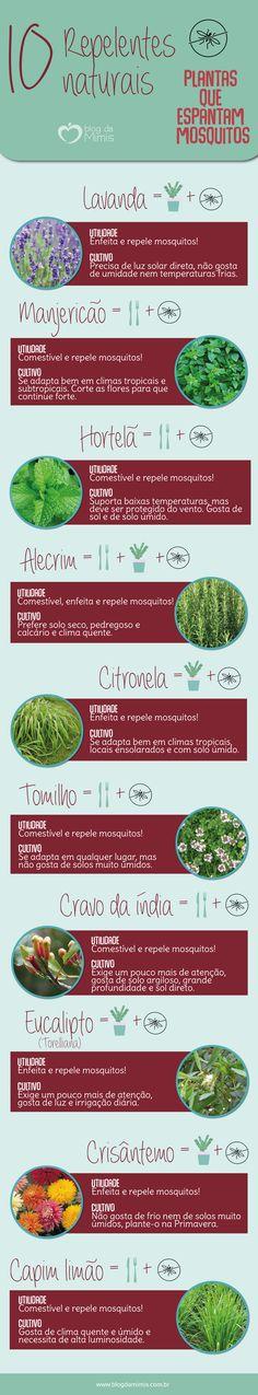 Repelentes naturais: 10 plantas que espantam mosquitos - Blog da Mimis #plantas #repelentes #casa #decor