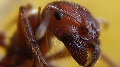 14 capete de furnici incredibile și atât de diferite
