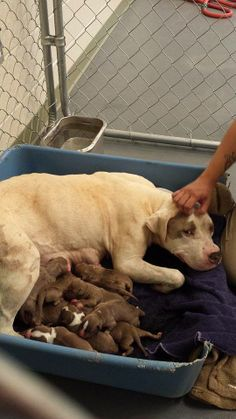 Georgia - Urgent Mommy and Pups Need You - Please Share  Click on pic for additional information about this Momma & her babies ♥♡♥