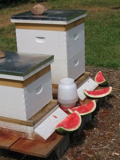 PHOTO ONLY - Bee Treat = the bees hang out with my chicken and peafowl. They will all enjoy this. The red around the bottom is cinnamon. It repels ants. Beekeeping For Beginners, How To Start Beekeeping, Buzz Bee, Raising Bees, Bee Farm, Backyard Beekeeping, Bee Friendly, Bee Happy, Save The Bees