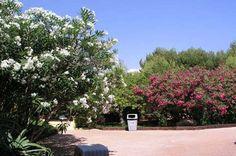 Leanderek - G-Portál Flowers, Plants, Plant, Royal Icing Flowers, Flower, Florals, Floral, Planets, Blossoms