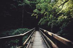 beautiful, nature, photography, spring, tumblr, vintage