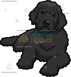 A Cute Portuguese Water Dog :  A dog with curly black coat and droopy ears rests on the floor head slightly tilted while looking ahead  The post A Cute Portuguese Water Dog appeared first on VectorToons.com.   #clipart #vector #cartoon