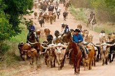 life in kansas ~ 2011 cattle drive