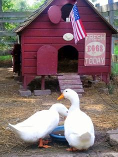 Stylish Duck House~good info
