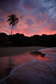 Paradise In Pink (by Darren Umbsaar)