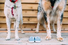 Pregnancy Announcement with dogs  at Wheeler Farm, Murray, UT | Sweet Cactus Photography | PORTRAITS