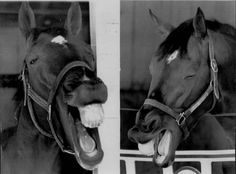 """BHWAHAHA!! Where did you learn all of your jokes, Mr. Ed?"""