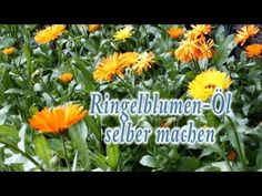 ▶ Ringelblumenöl (Calendula officinalis) selber machen - YouTube