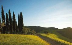 Discover the timeless charm and stunning natural beauty of Rosewood Castiglion del Bosco, one of the finest Tuscany luxury hotels in Montalcino, Italy. Montalcino Italy, Bal Harbour Shops, Living In New York, Tuscany Italy, Go Outside, Hotels And Resorts, Luxury Hotels, Art Pictures, Beautiful Homes
