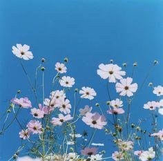 Rinko Kawauchi: «Untitled» (from the series Aila), 2004    © Rinko Kawauchi