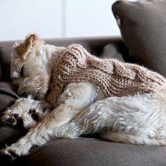 Oscar ~ pet coat pattern