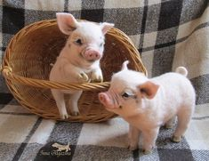 Baby Farm Animals, Baby Animals Super Cute, Baby Animals Pictures, Cute Little Animals, Cute Animal Pictures, Cute Funny Animals, Animals And Pets, Cute Baby Pigs, Baby Piglets