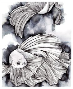 Pen and Ink drawing of Betta Fish Betta Splendens by bethabell #inkdrawings