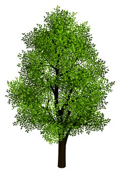 Green Tree Transparent Clipart Picture
