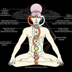Consciousness is what creates the different frequencies- allowing us to manifest reality and create different things and see things differently… once you tap in to the energy source- pineal gland activation- chakra meditation- you activate your TRUE. Kundalini Meditation, Mindfulness Meditation, Meditation Music, Les Chakras, Endocannabinoid System, Pineal Gland, Spirit Science, Tantra, Sacred Geometry