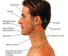 nurse-on-duty: Lymph nodes of the head and neck Nursing Tips, Nursing Notes, Physician Assistant, Dental Assistant, Nursing Assessment, Lymphatic Massage, Dental Hygiene School, Lymph Nodes, Lymphatic System