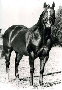 Sugar Bars (Three Bars X Frontera Sugar) [American Quarter Horse Hall of Fame and Museum]