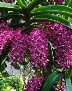 Orquídea  - Orchids  - Comunidade - Google+