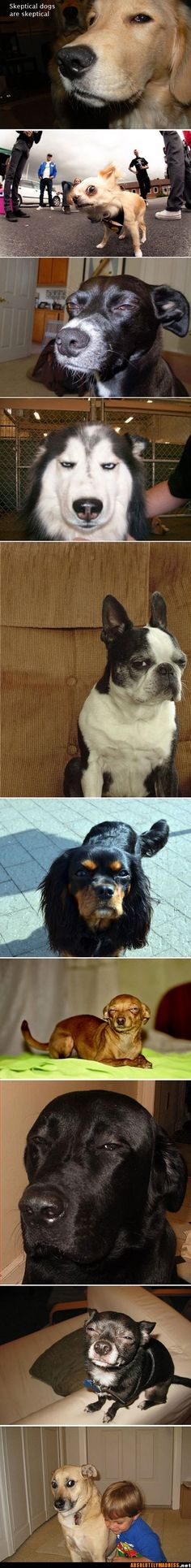 skeptical dogs. Hilarious.