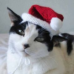 knitting pattern santa claus pet hat cat christmas от xmoonbloom
