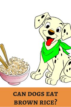 Brown rice is healthy option for diabetic patients. Will it boost dog's health? Start steaming! http://dogbabe.com/can-dogs-eat-brown-rice/