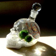 Skull Bottle with Nano Marimo Balls in Unique Halloween by MyZen