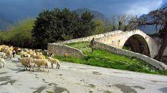 Shepard on Old Preveli Bridge, Crete