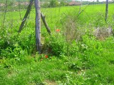 red Arch, Outdoor Structures, Garden, Nature, Plants, Garten, Arches, Flora, Plant